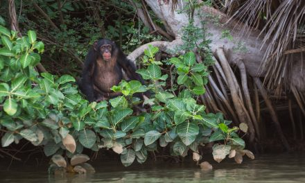 5 wildlife experiences to enjoy in The Gambia